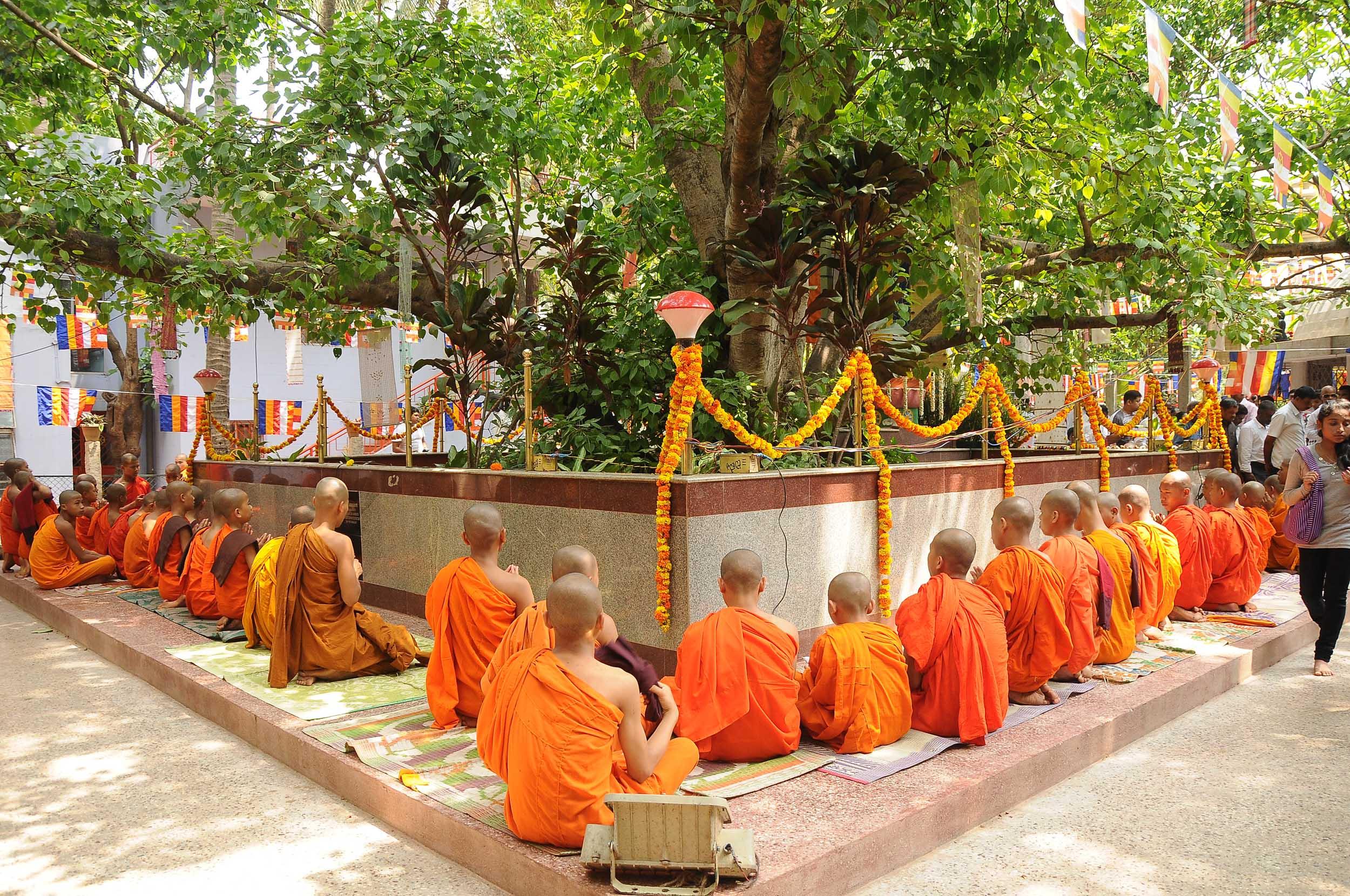 vesakha-buddha-jayanti-mahabodhi-2015-7